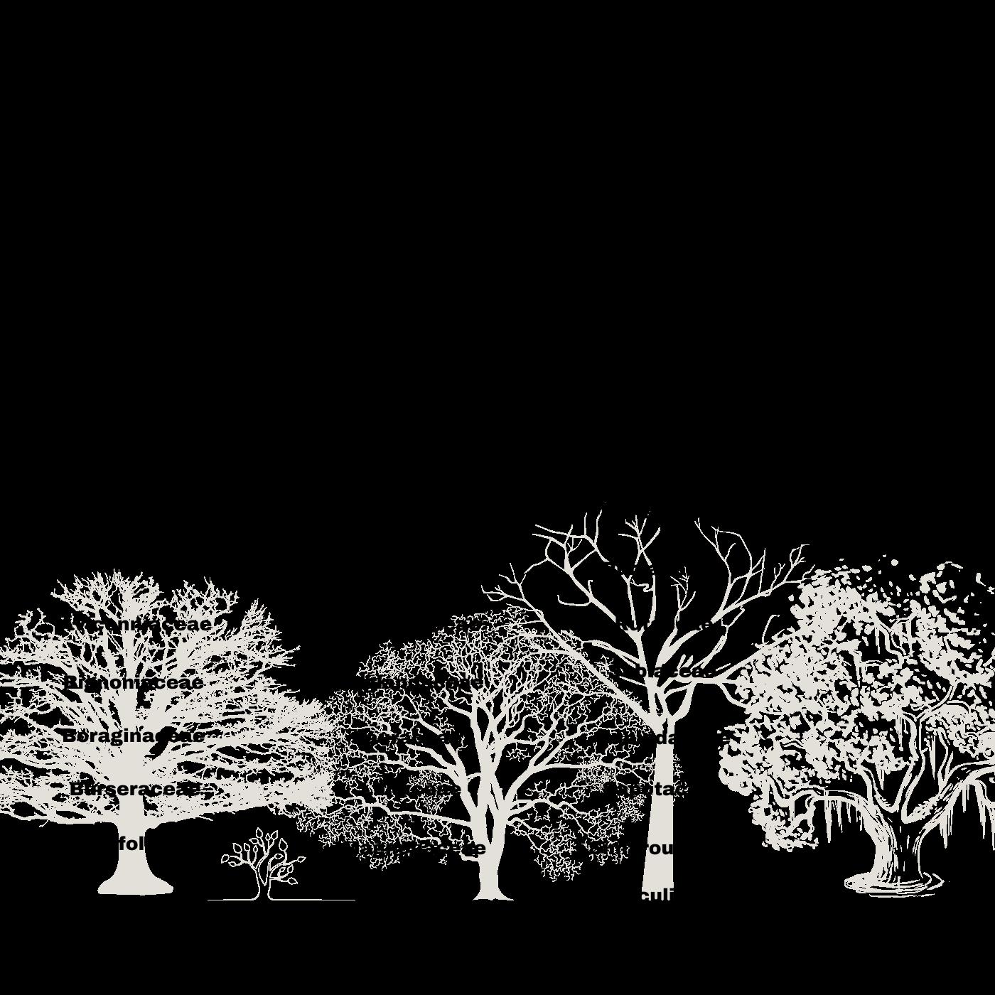 Los Espacios Verdes El Compromiso Con La Arborización. Especies amenazadas en peligo. Infografía. Roberto d'Aubuisson. 2021